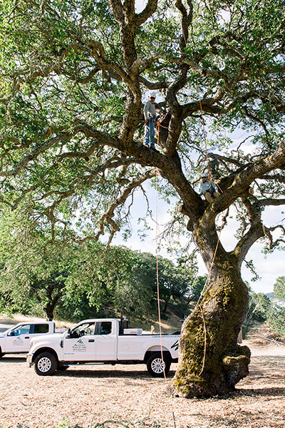 Commercial & Residential Tree Care Gilroy CA